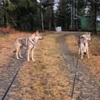 Eijlah & Askja på promenard