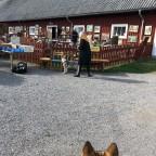 Loke på mijöträning i moheda