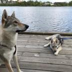 Askja och Loke vid växjö sjön