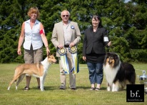 BEST IN SHOW  Swedish Champion Show for Collies. Rocco was the best collie at the Show!