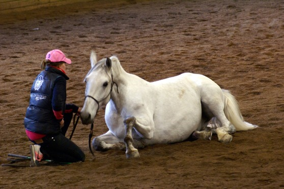 Anna Lewicki and her Lipizzaner Zigge, on the clinic. They did great! Photo Marie Laurén-Edin