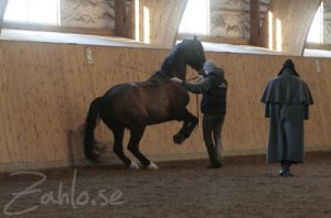 Bent Branderup is teaching Christofer who is practicing the levade with Nicki Corsai.