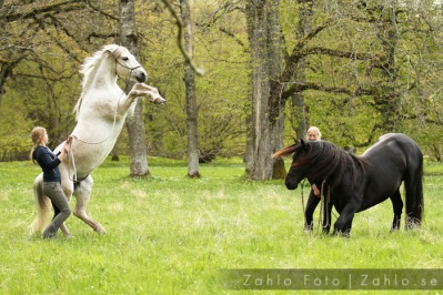 HorseVision tränare Jenny & Poco, Stine & Yme