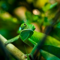 Kameleont_DSC_3724_1024