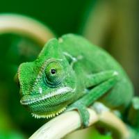 Kameleont_DSC_3797_1024