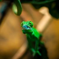Kameleont_DSC_3681_1024