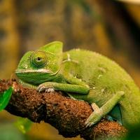Kameleont_DSC_3631_1024