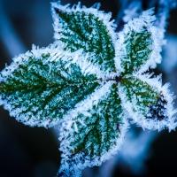 Vinter-frostDSC_3578_1024