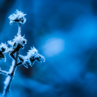 Vinter-frost_DSC_3584_1024