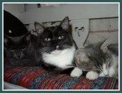 Molly, Robin & Linus