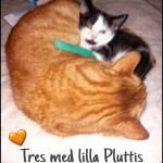 Pluttis12