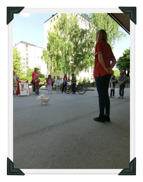 Sollentuna Veterinärklinik - Vårfest 2012 CIMG0150