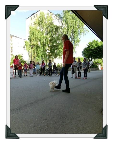 Sollentuna Veterinärklinik - Vårfest 2012 CIMG0152