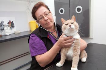 Sollentuna Veterinärklinik - Vaccinering katt