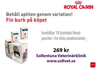 Sollentuna Veterinärklinik - renal till katt