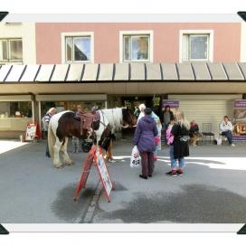 Sollentuna Veterinärklinik - Vårfest 2012 CIMG0141