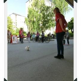 Sollentuna Veterinärklinik - Vårfest 2012 CIMG0151