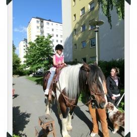 Sollentuna Veterinärklinik - Vårfest 2012 CIMG0172
