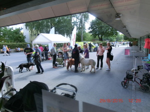 Full fart på torget - Sollentuna Veterinärklinik firar 5 år