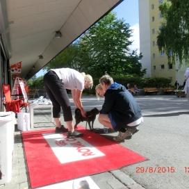 Sollentuna Veterinärklinik - firar 5 år -  7