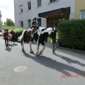 Sollentuna Veterinärklinik - firar 5 år -  19