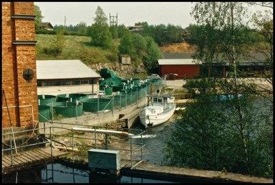 Fiskodlingen vid Töcksfors Bruk.
