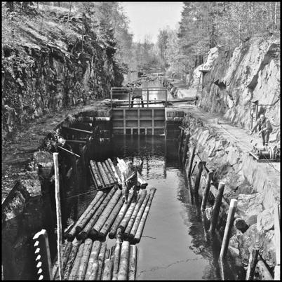 Slussning av timmermosor på 1960-talet.