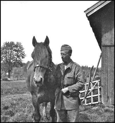 Häst och skötare som var inkallade till beredskapstjänst i Töcksfors under andra världskriget. Foto : Uno Brander