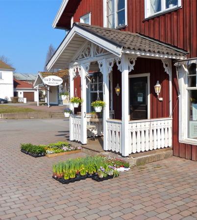 28 mars 2014 - Per i Blomsterbutiken dukade upp de första planteringsblommorna för året.