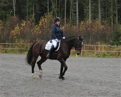 12 oktober 2014 - Vid Mosseruds Gård i Vännacka arrangerade man tävling i hästdressyr.