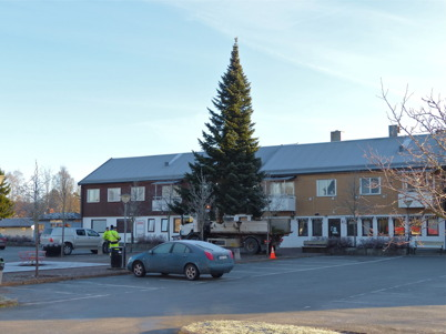 26 november 2014 - Julgranen, som vuxit på Kjell och Eva Wik´s villatomt, anlände till torget.