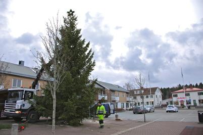 29 november 2013 - och så kom julgranen till torget i Töcksfors traditionsenligt.