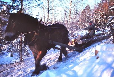 Gerhard på Nygård kör timmer.
