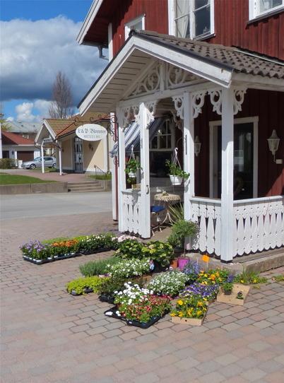 2 maj 2015 - Blomsterbutiken i Töcksfors signalerade att nu är det vår.