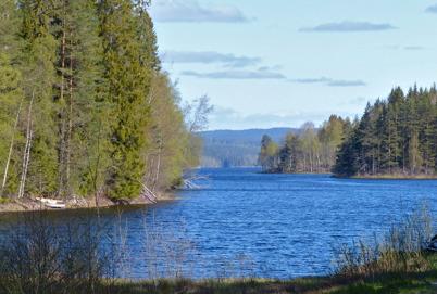 14 maj 2015 - Björkarna började grönska längst med Torsvikens stränder.