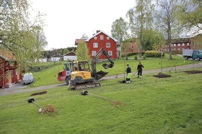 18 maj 2015 - De nya träden vid nerfarten till kanalparken kom på  plats.