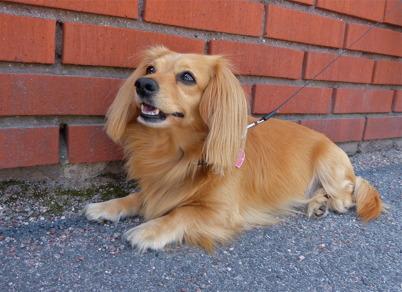 4 juli 2015 - Sommarvärmen infann sig till Töcksmarksveckan och både djur och människor ville helst vara i skuggan.