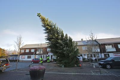26 november 2015 - Och kommunen åkte till Skarbol för att hämta årets julgran som sedan restes på torget i Töcksfors.