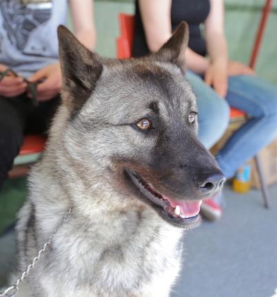 Gray representerade Svenska Gråhundsklubben.