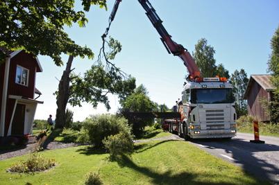 17 augusti 2016 - I Bryngelsbyn fällde man träd med hjälp av kranbil.