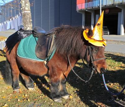 En ponny får stå ut med en del när det är Halloween.