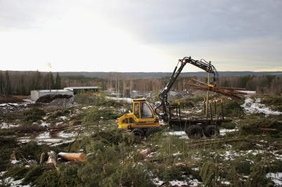 19 januari 2017 - Fortsatte gjorde även skogsavverkningen på Skärmons industriområde.