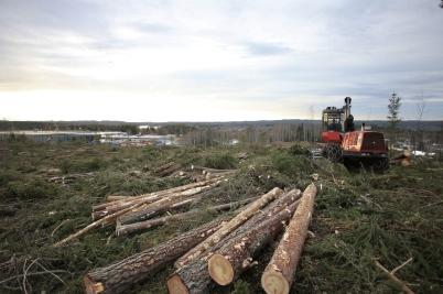 20 januari 2017 - Och på Skärmons industriområde fortsatte skogs-avverkningen.