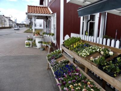 11 april 2017 - Blomsterboden dukade fram planteringsblommor.