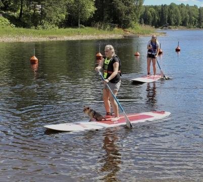 Vid Töcksfors camping kan man hyra SUP ( = Stand up Paddleboard ), och testa denna nya form av vattenaktivitet.