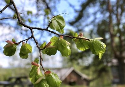 11 maj 2018 - Våren var här och träden grönskade.