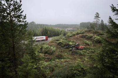 6 september 2018 - Vid gränsen fällde man skog på området där tullstationen skall byggas.