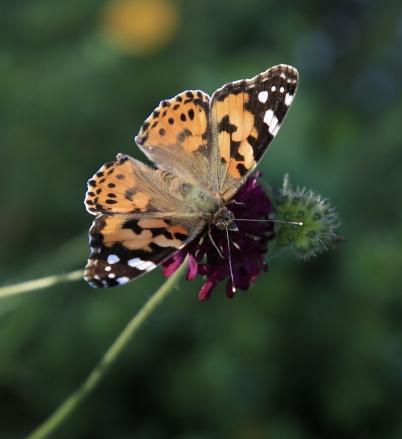 26 augusti 2019 - På ängarna jobbade pollinerarna.