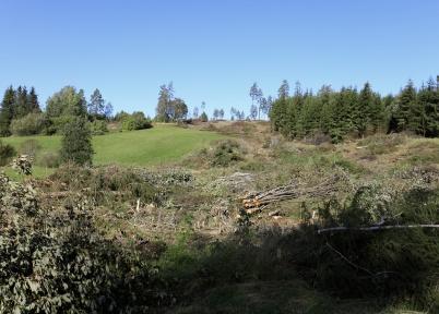 15 september 2019 - Och vid Kallnäset fortsatte man att fälla skog.
