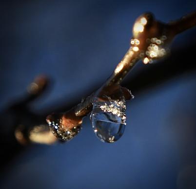19 januari 2020 - Naturen lurades tro att våren var kommen.